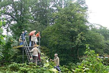 Arboretum_Kalmthout_emmenopterys_visitors_on_scaffolding_2_350L