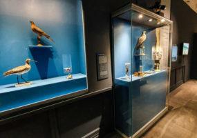 Mon précieux… Mon trésor.  Expo Museum de Rouen