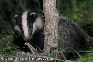 Merci à Jean-Pierre Trinquecostes pour le prêt de sa photo (n.d.l.r.)