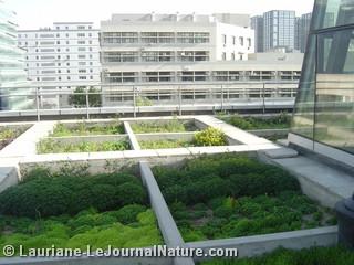 Toitures végétalisées à Pékin